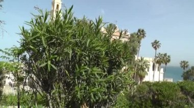 Part of St. Peter's Church,green trees and plants — Stock Video