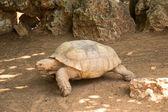 乌龟 — 图库照片