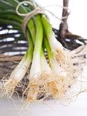Spring onions — Stock Photo