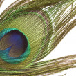 Peacock feather detail — Stock Photo #18722845