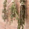 Dried herbs — Stock Photo #18729987