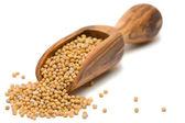 семена горчицы — Стоковое фото