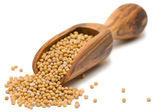 Hořčičná semena — Stock fotografie