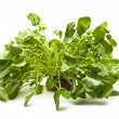 Stock Photo: Upland cress