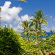 Stock Photo: Tropical garden