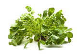 Upland cress — Stock Photo