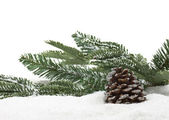 Winter fir cone — Stock Photo