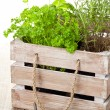 Royalty-Free Stock Photo: Herbs in wooden box