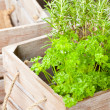 Herbs in wooden box — Stock Photo #19837443