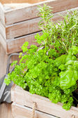 Herbs in wooden box — Stock Photo