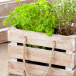 Herbs in wooden box — Stock Photo #22658581