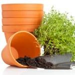 ������, ������: Plant pots