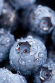 Blueberries macro — Stock Photo
