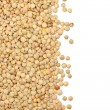 Lentil border — Stock Photo