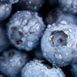 Blueberries macro — Stock Photo #35611489