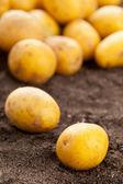 Potatoes — Stock Photo