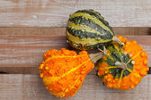Decorative gourds — Stockfoto