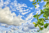 Leaves in the sky — Stock Photo