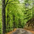 Road in the beech forest — Stock Photo