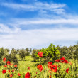 Red flowers and olive tree at spring In a — Stockfoto
