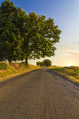 Road in the countryside at sunset. — Stock Photo