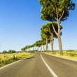 Road in the countryside — Stock Photo #30270165