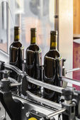 The bottling of wine — Stock Photo
