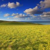 зеленые холмы под голубым небом — Стоковое фото