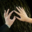 Touch of the hands of bride and groom with rings — Stock Photo