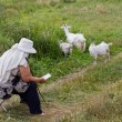 Mature woman tending goats — Stock Photo