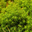 Stock Photo: Moss in the forest