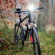 Stock Photo: Bicycle sport in forest