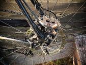 спортивных велосипедов в лесу — Стоковое фото