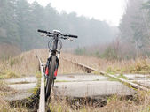 Bicycle sport in forest — Stockfoto