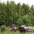 Stock Photo: View of forest