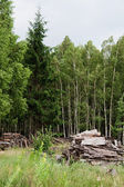 View of forest — Stock Photo