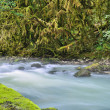 Misty mountain river — Stock Photo #38425511