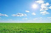 Zielone pole, słońce i niebo — Zdjęcie stockowe