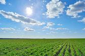 Green field under a clear sky — Zdjęcie stockowe