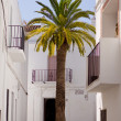 Palm tree and houses — Stock Photo #20423361
