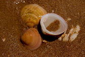 Seashells in water — Stock Photo