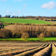Stock Photo: Farming in Darent Valley