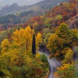 Stock Photo: Highway in the mountains among the trees