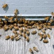 Bee hive with bees on it — Stock Photo #32666781