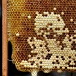 Honeycomb with developing queen bee larvae — Stock Photo