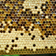 Stock Photo: Honeycombs with sealed cells