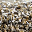 Bee hive with bees — Stock Photo