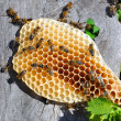 Honeycomb with bees — Stock Photo #33278787