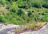 Flowers growing on a rock against mountain slope — Foto Stock