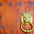 Old wooden door with a bronze lion head and iron rivets — Stock Photo